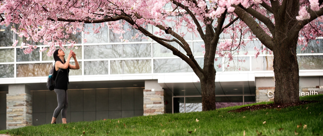 Student under a cherry blossom tree in front of Cornell Health building