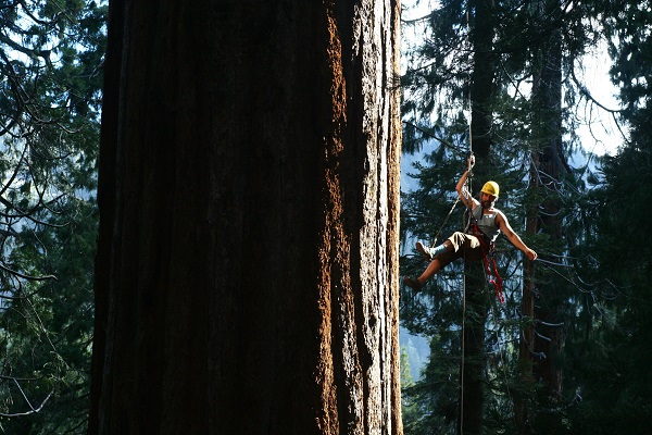 Pe 1659 Redwoods Tree Climbing Student Campus Life Cornell University Want to see more posts tagged #mark holton? pe 1659 redwoods tree climbing
