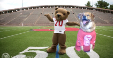 Cedric hanging out virtually with Touchdown Bear